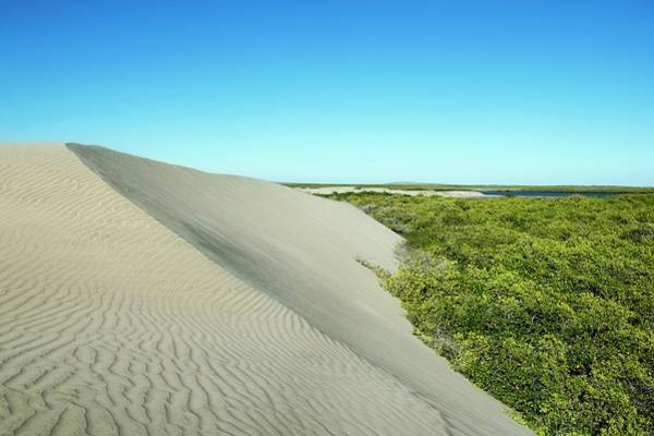 Wall Art - Photograph - Sand Dunes Encroaching On Mangroves by Christopher Swann/science Photo Library