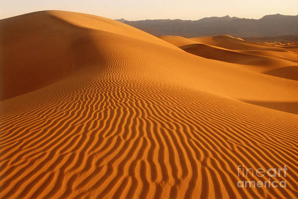 Photograph - Sand Dunes In Death Valley California by George Ranalli