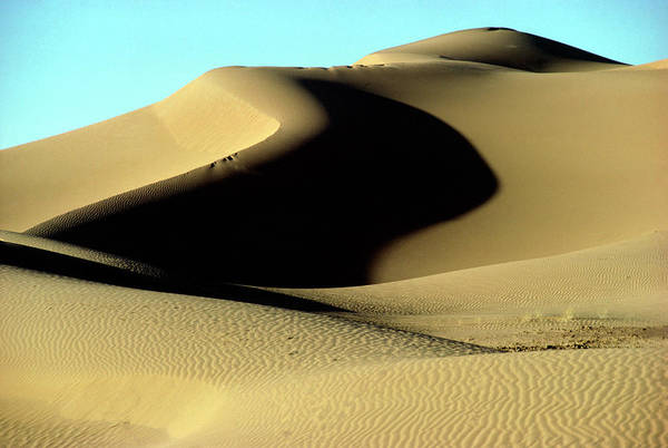 Sahara Photograph - Sand Dunes Near Kerzaz by Sinclair Stammers/science Photo Library