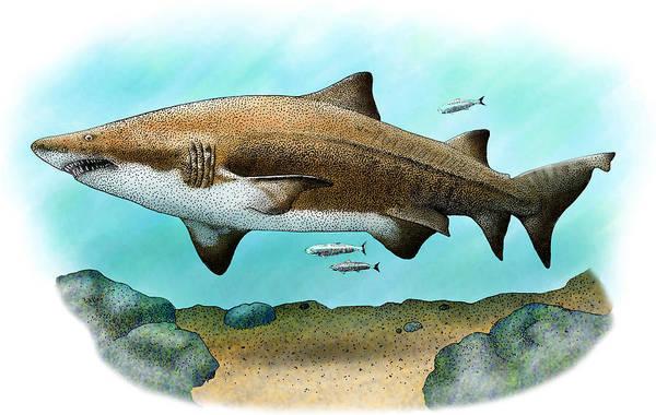 Wall Art - Photograph - Sand Tiger Shark by Roger Hall
