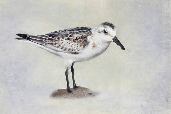 Photograph - Sanderling by Bill Wakeley