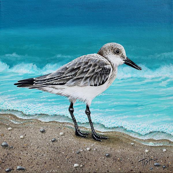 Painting - Sanderling by Tish Wynne
