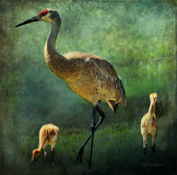 Gulf State Park Painting - Sandhill And Chicks by Barbara Chichester