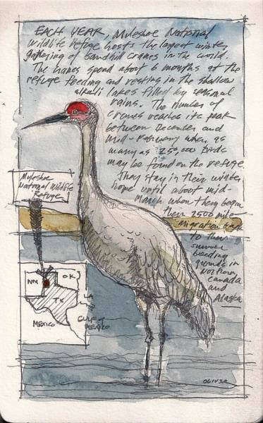 National Wildlife Refuge Wall Art - Mixed Media - Sandhill Crane by Tim Oliver