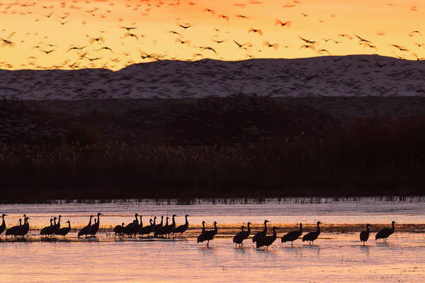 Bosque Del Apache Photograph - Sandhill Cranes And Other Waterfowl by Maresa Pryor
