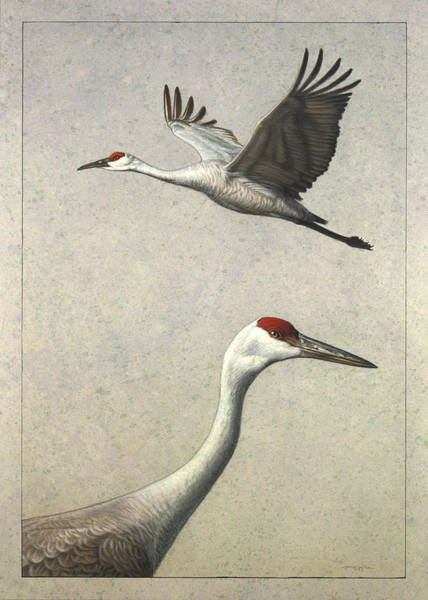 Johnson Wall Art - Painting - Sandhill Cranes by James W Johnson