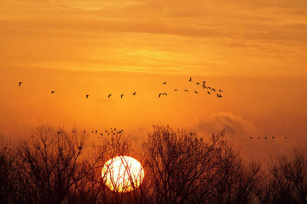 Wall Art - Photograph - Sandhill Cranes Silhouetted Aginst by Chuck Haney
