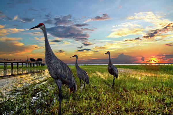 Sandhill Sunset Art Print