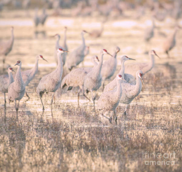 Wall Art - Photograph - Sandhills At Sunset by Ruth Jolly