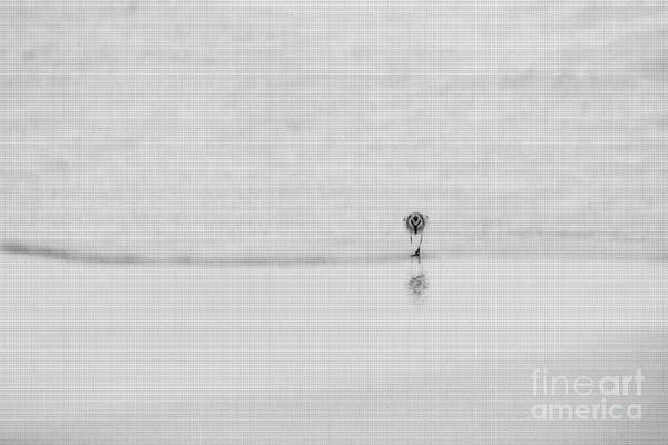 Photograph - Sandpiper Following Wave Up The Beach by Dan Friend