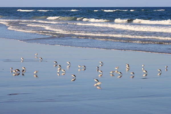 Wall Art - Photograph - Sandpiper Reflections And Waves by John Burk