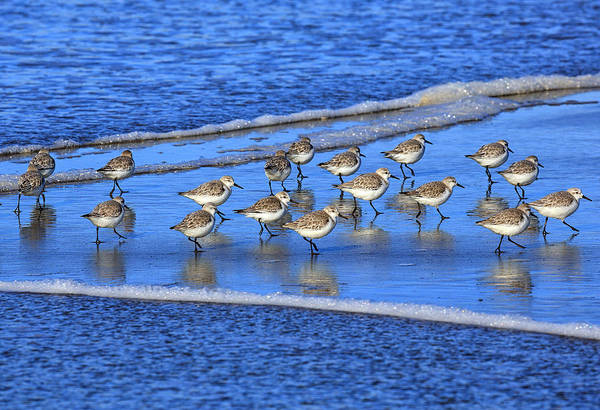 Oregon Coast Photograph - Sandpiper Symmetry by Robert Bynum