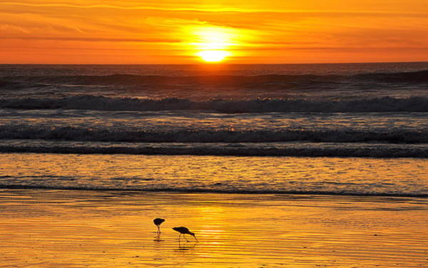 Photograph - Sandpipers At Sunset by AJ  Schibig