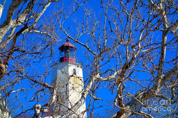 Photograph - Sandy Hook Lighthouse Through Trees by Olivier Le Queinec