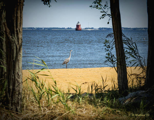 Sandy Point State Park Photograph - Sandy Pt Shoal Lighthouse And Blue Heron by Brian Wallace
