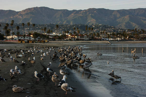 Oceanfront Photograph - Santa Barbara Beach Crowd  by Georgia Mizuleva