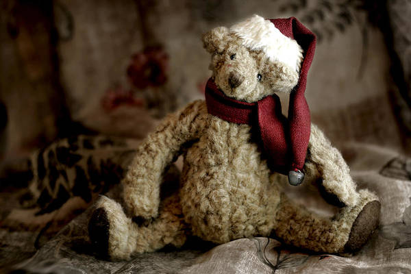 Stuff Photograph - Santa Bear by Carol Leigh