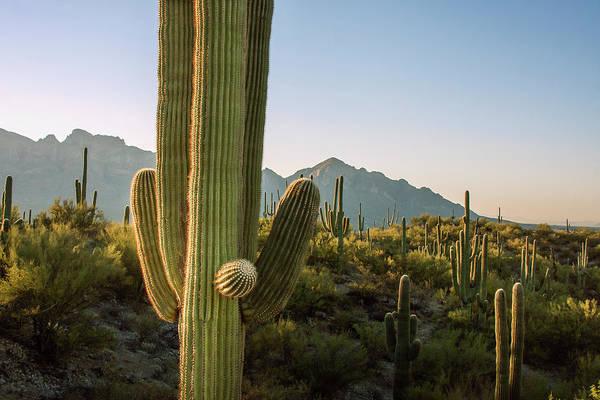 Wall Art - Photograph - Santa Catalina Mountains In Arizona by Zandria Muench Beraldo