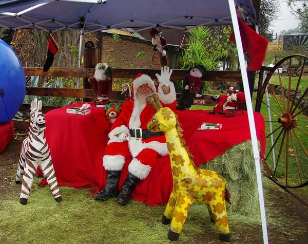 Photograph - Santa Clausewith The Animals by Phyllis Spoor