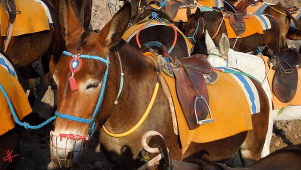Santorini Donkeys Ready For Work Art Print