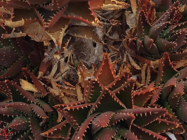 Photograph - Santorini Island Cactus Greece by Colette V Hera  Guggenheim