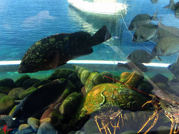 Photograph - Santorini Island  Fish Greece  by Colette V Hera  Guggenheim