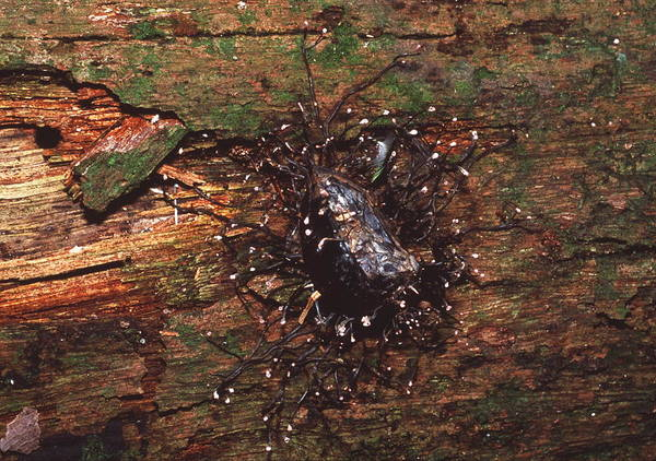 Saprophytic Wall Art - Photograph - Saprophytic Fungus by Sinclair Stammers/science Photo Library