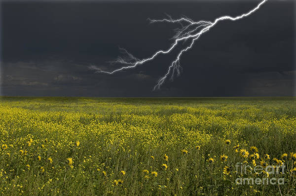 Photograph - Saskatchewan Prairie Lighting by Mark Newman