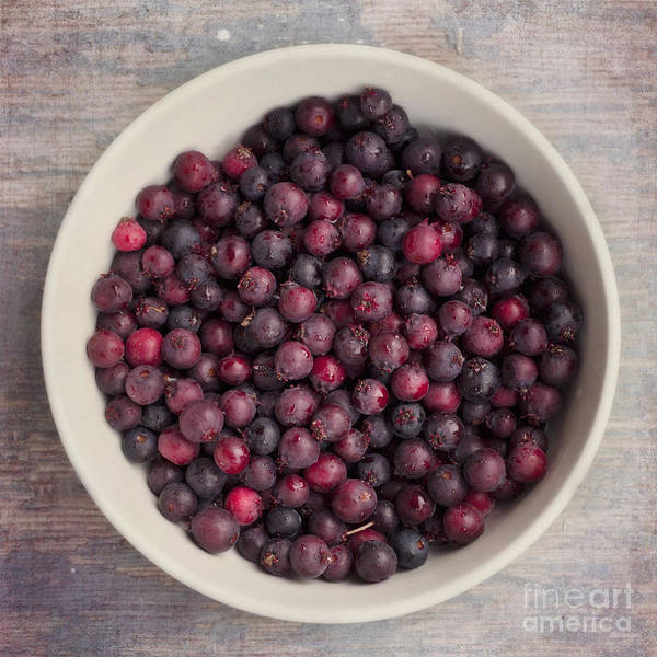 Blue Berry Photograph - Saskatoon Berries by Priska Wettstein