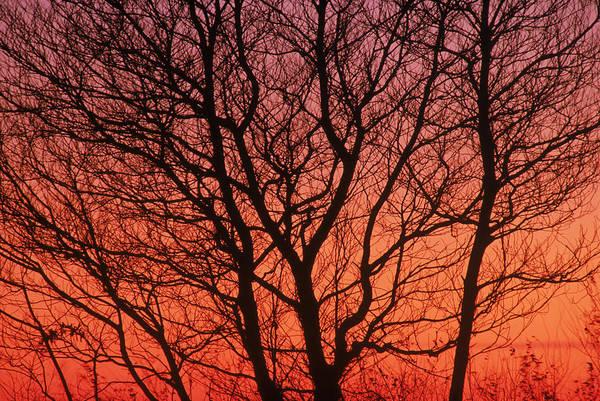 Sassafrass Photograph - Sassafras Sunset by Jeffrey Lepore
