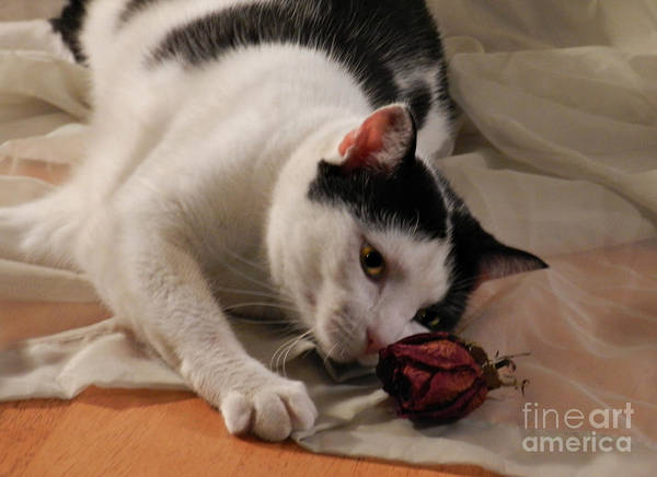Photograph - Sassy And The Rose Bud by Grace Dillon