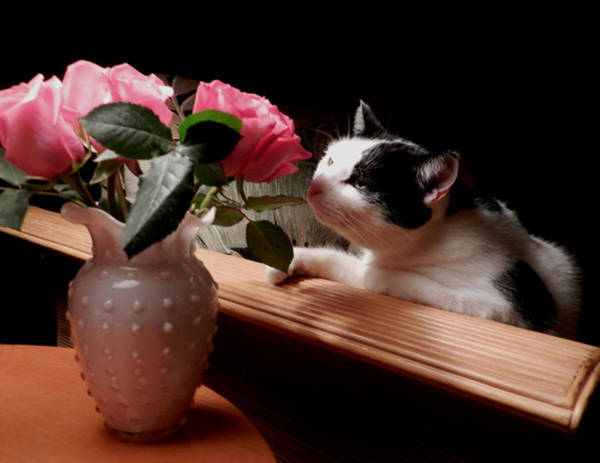 Photograph - Sassy And The Roses by Grace Dillon