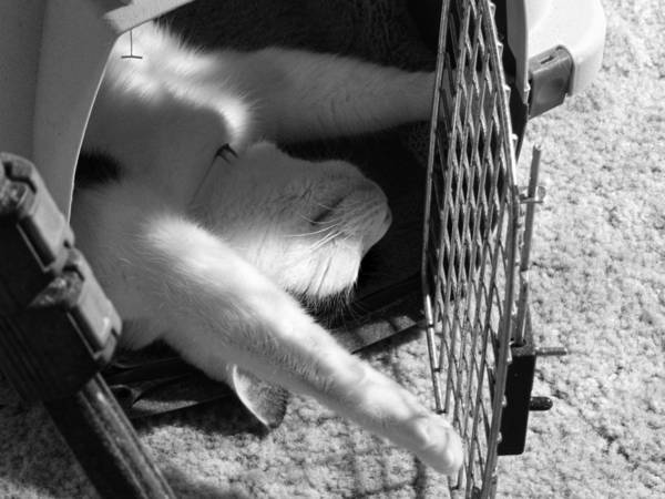 Photograph - Sassy Safe And Stretched by Grace Dillon