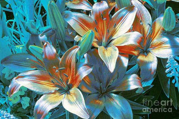 Tigerlily Wall Art - Photograph - Satin by Kathleen Struckle