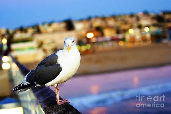 Wall Art - Photograph - Saturday Night Seagull by Katya Horner
