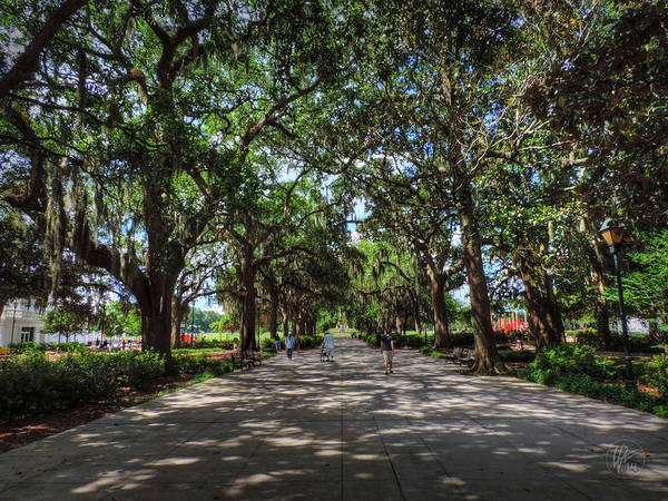 Photograph - Savannah - Forsyth Park 003 by Lance Vaughn