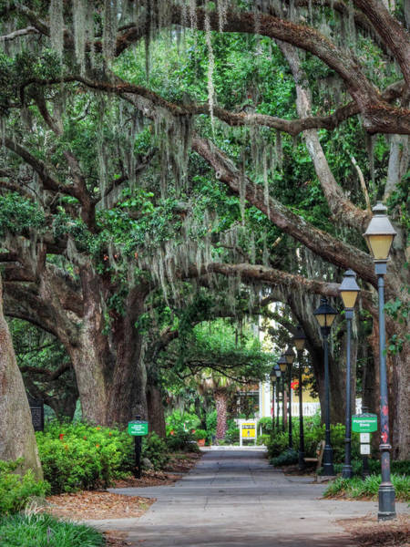 Photograph - Savannah - Forsyth Park 006 by Lance Vaughn