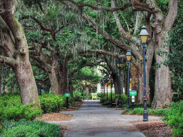 Photograph - Savannah - Forsyth Park 007 by Lance Vaughn