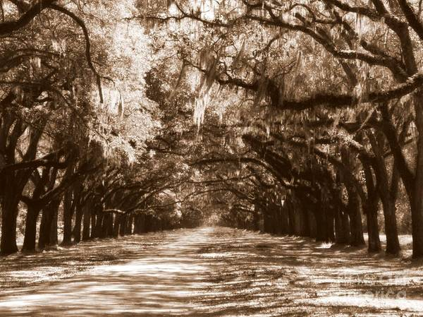Photograph - Savannah Sepia - The Old South by Carol Groenen