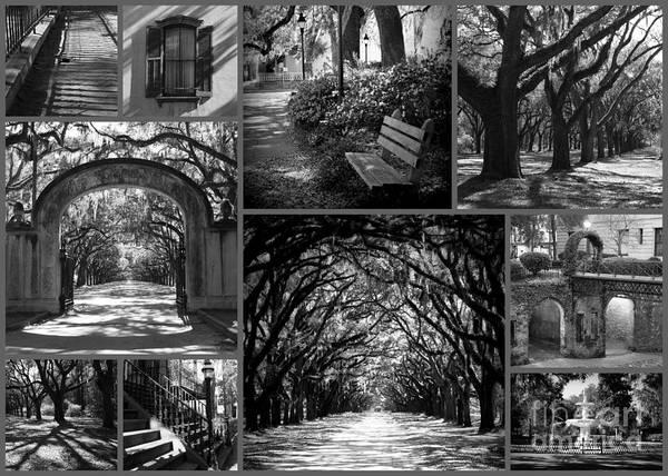 Photograph - Savannah Shadows Collage by Carol Groenen