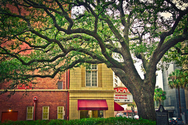 Savannah Square Art Print