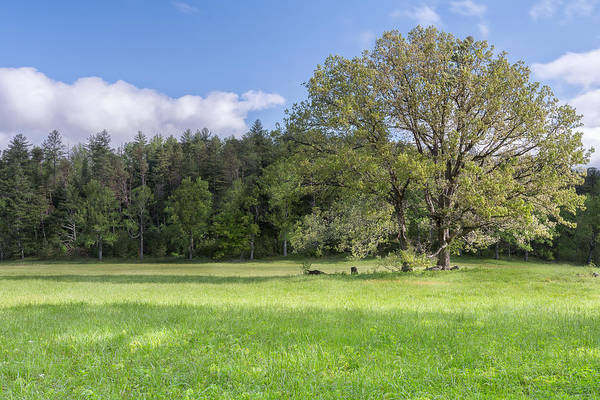 Photograph - Save My Tree by Jon Glaser