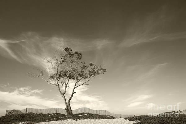 Save The Tree Art Print