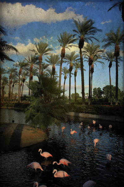 Palm Desert Photograph - Savoring The Last Light by Laurie Search