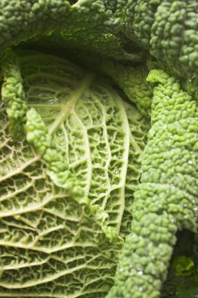Wall Art - Photograph - Savoy Cabbage (detail) by Foodcollection