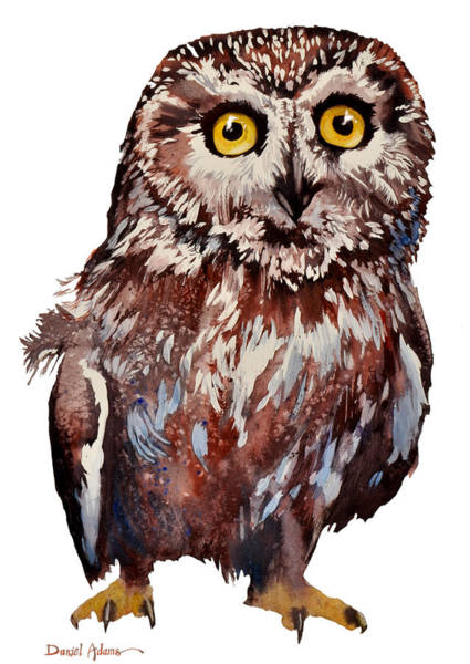 Painting -  Da148 Saw Whet Owl Daniel Adams by Daniel Adams