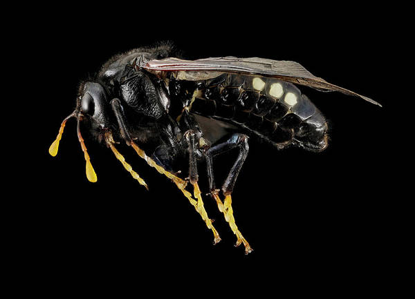 Elm Photograph - Sawfly by Us Geological Survey