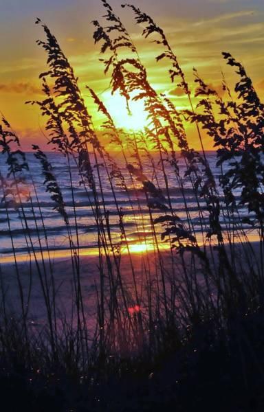 Sawgrass Digital Art - Sawgrass Sunset by Kicking Bear  Productions