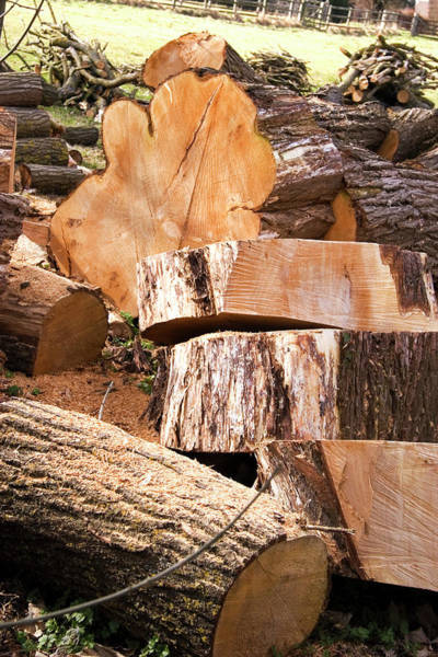 Logs Photograph - Sawn Logs by Sheila Terry/science Photo Library