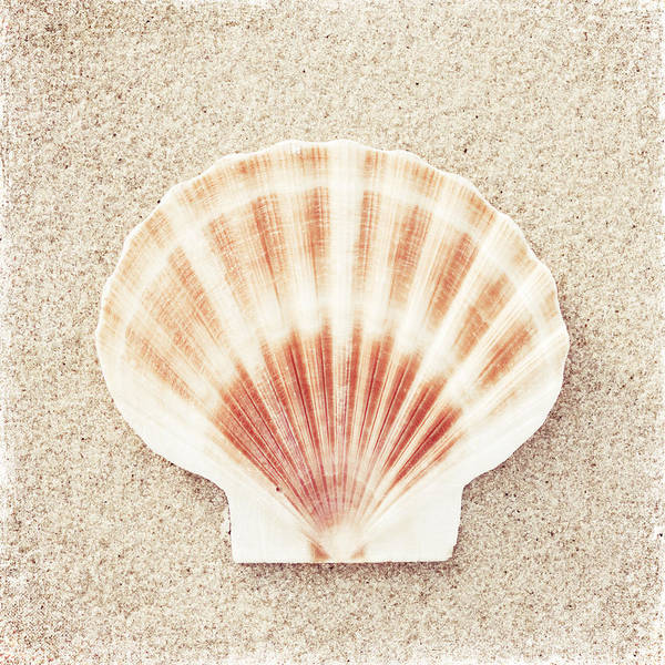 Beaches Photograph - Scallop Shell by Carolyn Cochrane